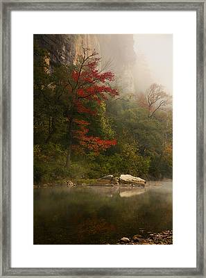 Sweetgum In The Mist At Steel Creek Framed Print by Michael Dougherty