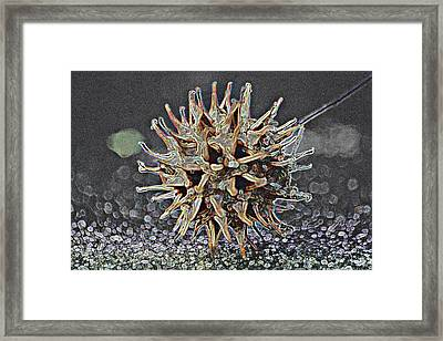 Framed Print featuring the photograph Sweetgum Ball by Donna G Smith