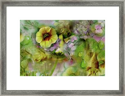 Sweetness And Light Framed Print by Bonnie Bruno
