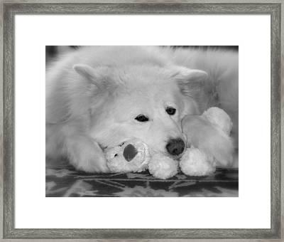 Sweetness Framed Print by Fiona Kennard