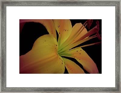 Sweetness Glow Framed Print by Debra     Vatalaro