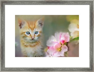 Sweetness In A Small Package Framed Print