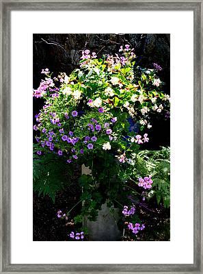 Sweetness In My Garden Framed Print