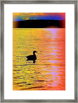 Swim The Colorful Sea With Me  Framed Print by Hilde Widerberg