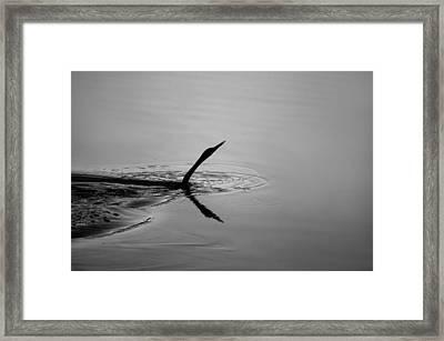 Swim Framed Print by TJ Drysdale