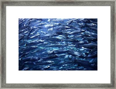 Swimming Against The Teide Framed Print