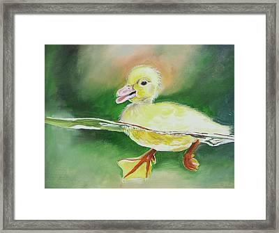 Swimming Duckling Framed Print