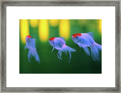 Swimming Fishes Underwater Framed Print by Yuki Crawford