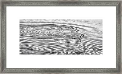 Framed Print featuring the photograph Swimming From Circles by Joe Bonita
