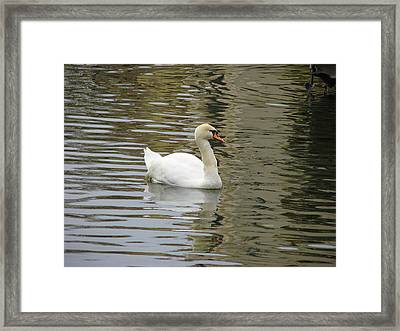 Swimming Framed Print by Kathy Roncarati