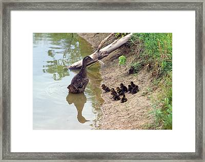 Framed Print featuring the photograph Swimming Lesson by Wanda Brandon