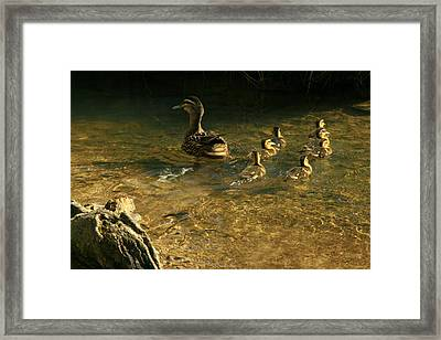 Swimming Lessons Framed Print by Terry Perham