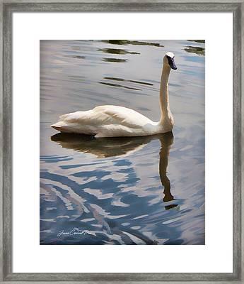 Swimming Swan Framed Print