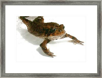 Framed Print featuring the digital art Swimming Toad by Barbara S Nickerson