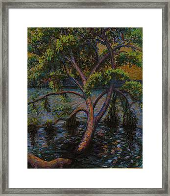 Swimming Tree Framed Print by Art Nomad Sandra  Hansen