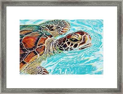 Swimming Turtle Framed Print