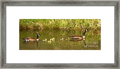 Swimming With The Youngsters At Schwabacher Landing Framed Print