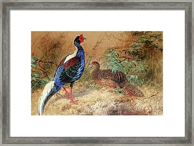Swinhoe's Pheasant  Framed Print by Joseph Wolf