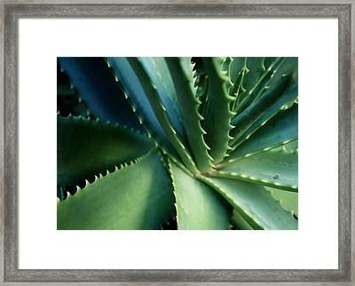Swirl Framed Print by Ellen Cotton