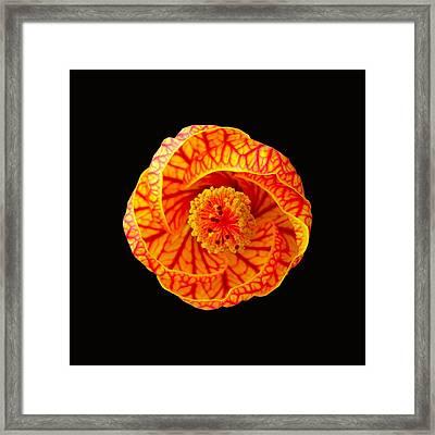 Swirl Framed Print by Kathy Daxon