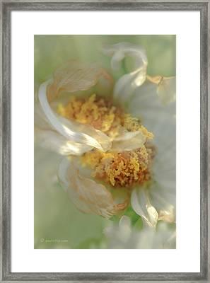 Flower Swirl.... Framed Print