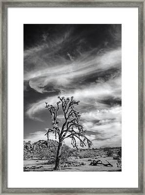 Swirling Clouds In Joshua Tree Framed Print by Joseph Smith