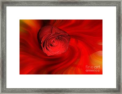 Swirling Rose Framed Print
