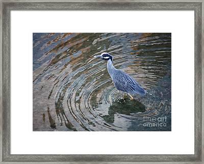 Swirls Around Heron Framed Print by Carol Groenen