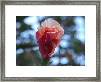 Swirly Sorbet Bloom Framed Print by Jean Booth