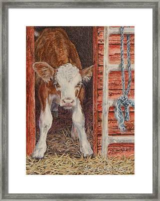 Swiss Calf, Got Milk? Framed Print