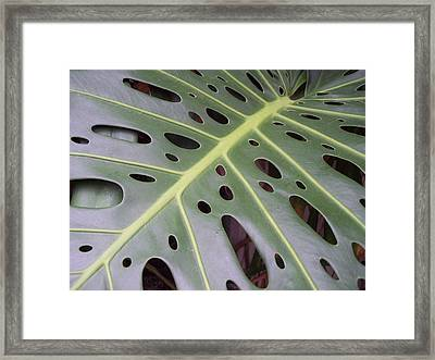 Swiss Cheese Plant Framed Print
