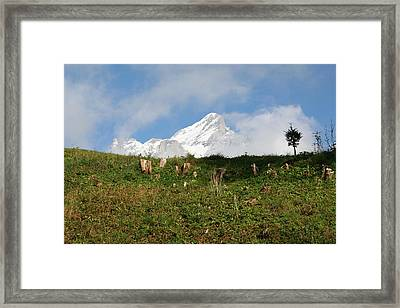 Switzerland Snow Capped Alps Landscape Framed Print