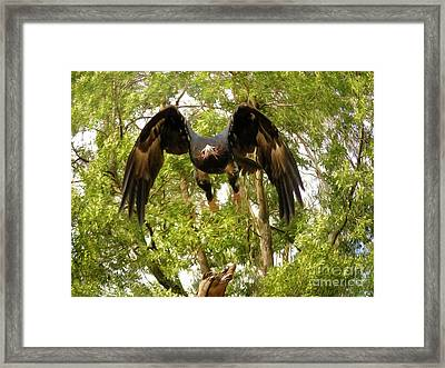 Swoop Framed Print by Teresa A and Preston S Cole Photography