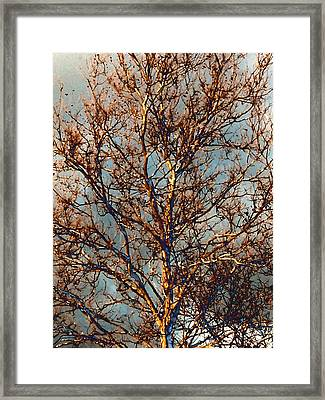 Sycamore Against November Sky Framed Print by Beth Akerman