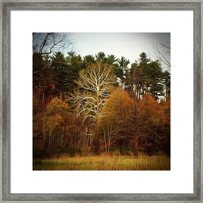 Sycamore And Pines Framed Print