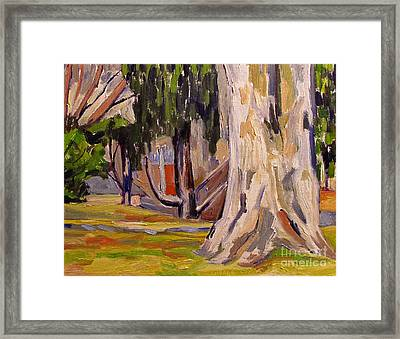 Sycamore At Millstone Framed Print by Charlie Spear