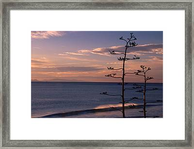 Sycamore Cove And Channel Islands Framed Print by Soli Deo Gloria Wilderness And Wildlife Photography