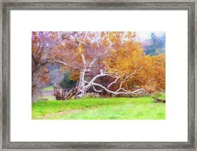 Sycamore Grove 1 Framed Print