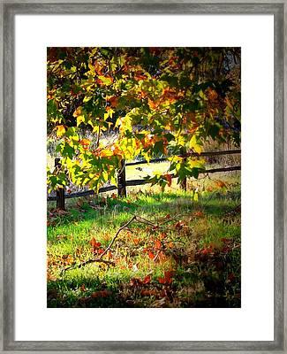 Sycamore Grove Fence 2 Framed Print