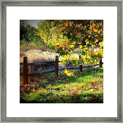 Sycamore Grove Series 11 Framed Print
