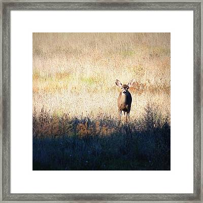 Sycamore Grove Series 2 Framed Print