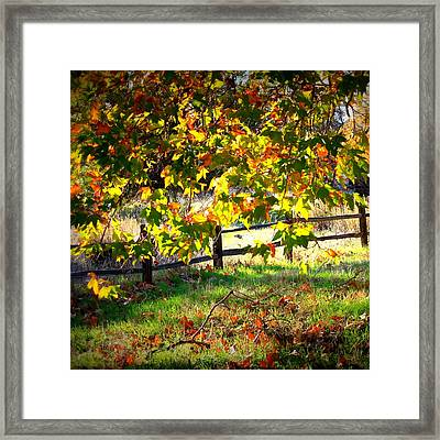 Sycamore Grove Series 5 Framed Print by Carol Groenen