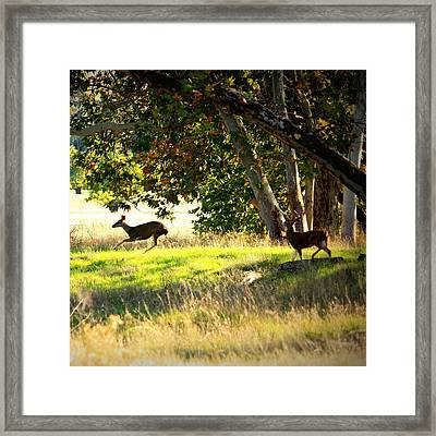 Sycamore Grove Series 9 Framed Print by Carol Groenen