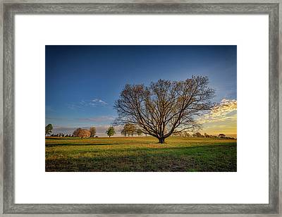 Sycamore In Valley Forge Framed Print by Rick Berk
