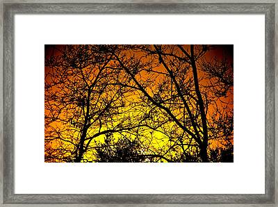 Sycamore Sunset Framed Print