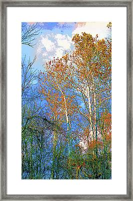 Sycamore Tree Image Framed Print by Paul Price