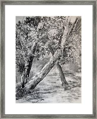 Sycamore Tree In Goliad State Park Framed Print by Karen Boudreaux