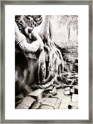 Framed Print featuring the painting Sycamore Tree Overgrowing Ruins- Cambodia by Ryan Fox
