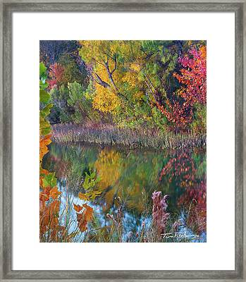 Sycamores And Willows Framed Print