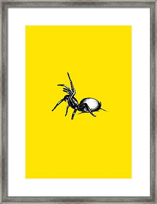 Sydney Funnel Web Framed Print by Nicholas Ely